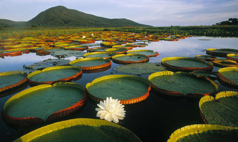 Brazil's Pantanal – a water world for exotic birds and beasts | Life... | Scoop.it