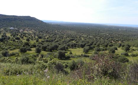 Settembre 2013, i primi percorsi naturalistici in Puglia di Tournelsud.com | Tournelsud.com | Scoop.it