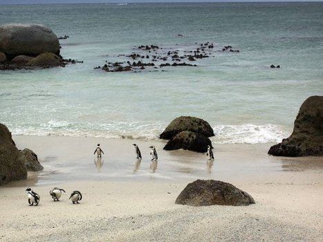A tour of South African vineyards yields some fine pairings, and more than a few penguins | Vitabella Wine Daily Gossip | Scoop.it