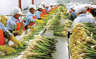 INTELIGENCIA ECONOMICA: PARA TOMAR DECISIONES ... | Cadena de alimentos | Scoop.it