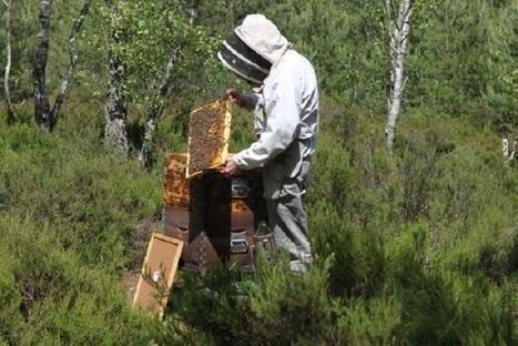 En ce printemps, les abeilles de France sont au plus mal | Toxique, soyons vigilant ! | Scoop.it