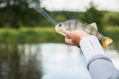Lacey Urgent Care Talks Fish Handler's Disease and How to Prevent It | U.S. HealthWorks Lacey | Scoop.it