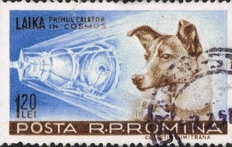 L'insolito destino degli animali nello spazio | Stuka78 | Scoop.it