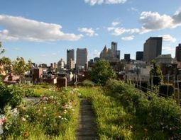 Urban Farming   Aquaponics World View   Scoop.it