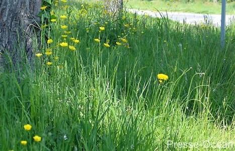AlterIAS : pour préserver la biodiversité et mieux gérer les plantes invasives | biodiversité en milieu urbain | Scoop.it