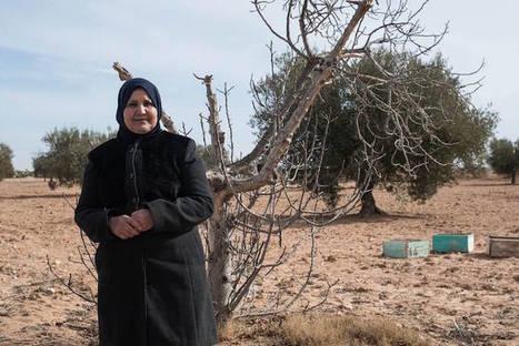 La Tunisie est confrontée à la pollution et au manque d'eau | Des nouvelles de la 3ème révolution industrielle | Scoop.it