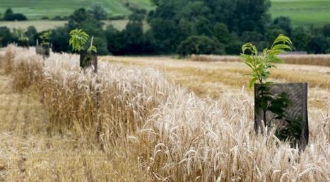 En Afrique, restaurer les sols pour lutter contre la faim | Alim'agri | Chimie verte et agroécologie | Scoop.it
