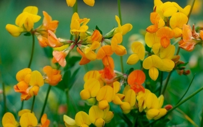 The best apps to identify unknown plants and flowers | Garden apps for mobile devices | Scoop.it