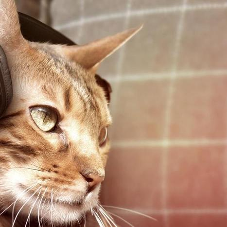 Sony Launches Headphones for Cats on April Fools' Day   News You Can Use - NO PINKSLIME   Scoop.it