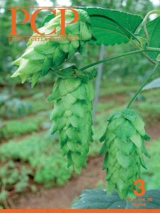 The Draft Genome of Hop (Humulus lupulus), an Essence for Brewing | Plant Gene Seeker -PGS | Scoop.it