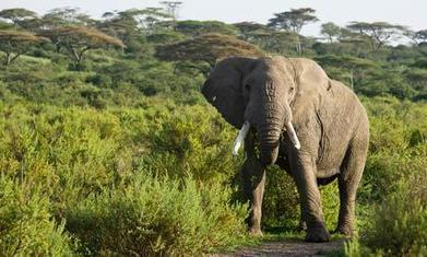Execute elephant poachers on the spot, Tanzanian minister urges | Life on Earth | Scoop.it