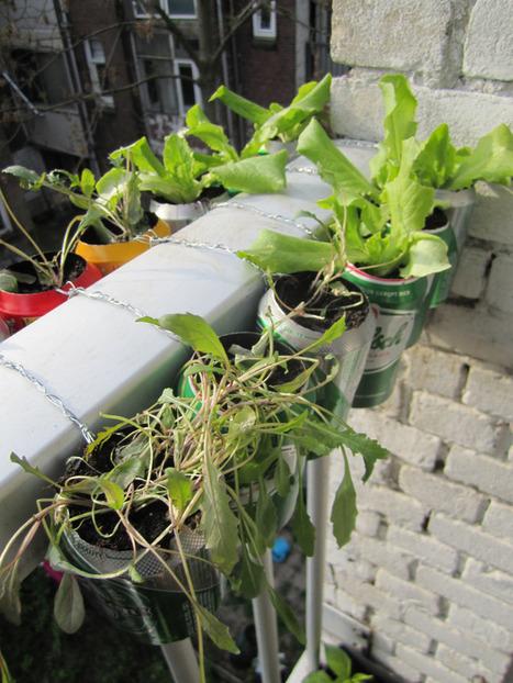Urban Farming at Home - Part 1: Building our garden   Urban farming   Scoop.it