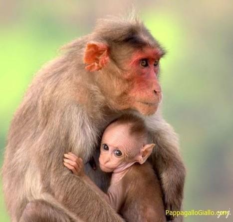 Cuccioli dei animali e le loro mamme - PappagalloGiallo.com   ANIMALI   Scoop.it
