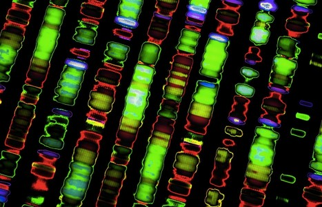 Your Next Prescription Could Be A Genome Sequence | SynBioFromLeukipposInstitute | Scoop.it