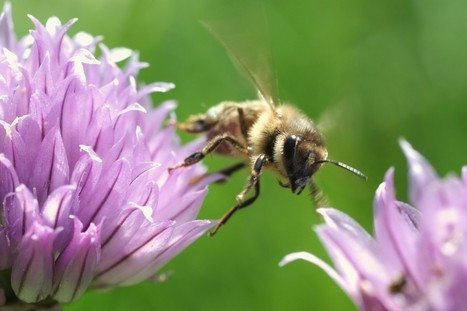 New Study Shows Common Insecticide Is Killing Bee Sperm - WAKING SCIENCE | The Peoples News | Scoop.it