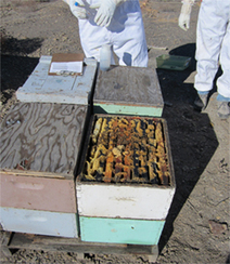 Colorado State University Extension | Bees and Beekeeping | Scoop.it