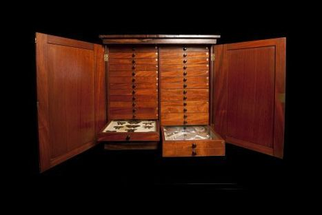 Look Inside the Specimen Cabinet of a Charles Darwin Colleague : Discovery News | Visual Communication for Scientists | Scoop.it