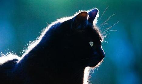 Katten en av mange trusler mot biologisk mangfold | Liv & Røre | Scoop.it