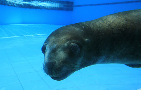 Sea lions shot for taking fish: researcher | Ocean Conservation | Scoop.it