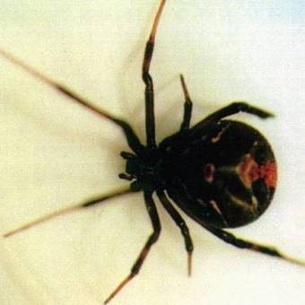 '<br/>Golfer bit by spider, digs out venom with spare tee - USA TODAY | Quantum Power | Scoop.it