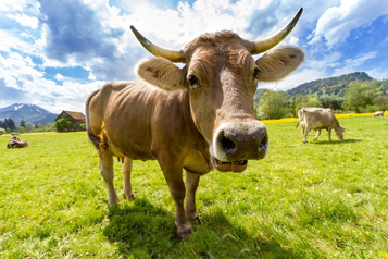 Dairy Marketing vs. Reality | Permaculture, Homesteading, Ecology, & Bio-Remediation | Scoop.it
