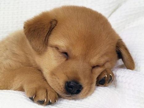 Te gustan los perros? Este post es para vos | Mas mascotas | Scoop.it