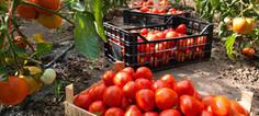 La sécurité sanitaire des aliments remise en cause par les résidus de pesticides | Pesticides | Scoop.it