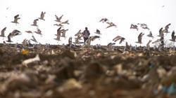 'Super trash' : le désastre écologique d'une décharge à ciel ouvert sur la Côte d'Azur | Toxique, soyons vigilant ! | Scoop.it