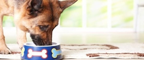 5 Tips for a Healthier, Happier Pet | Organic Dog Treats | Scoop.it