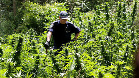 Riverside Police Bust Four Public Marijuana Cultivation Sites | What Every Drug User and Drinker Should Know About Law | Scoop.it