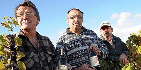 Un cru languedocien dans la cave de l'Elysée | Vins Sud de France | Scoop.it
