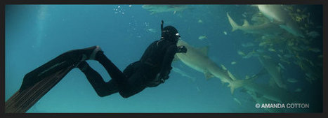 Debunking Myths About Shark Diving | All about water, the oceans, environmental issues | Scoop.it