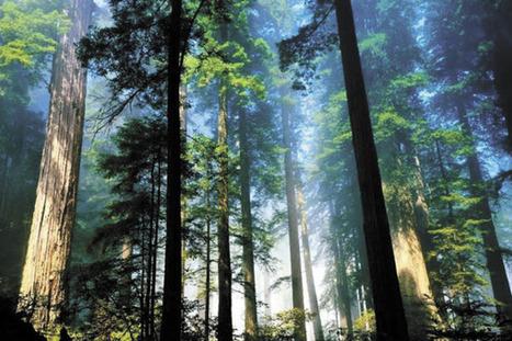 La sostenibilidad del planeta depende de los bosques   LA DESFORESTACION DE ARBOLES   Scoop.it