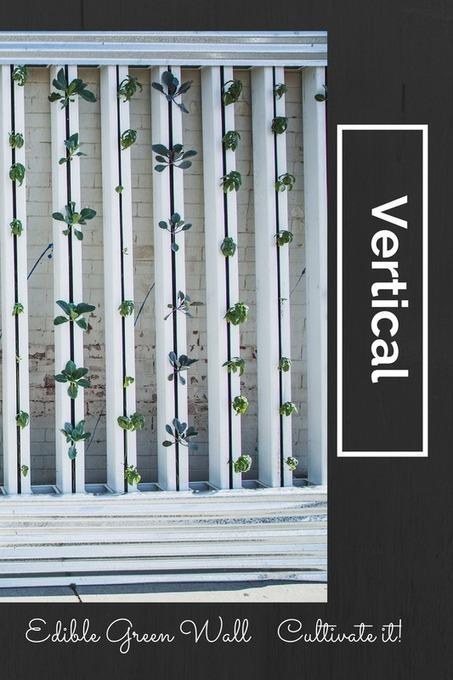 Las Vegas How About A Green Wall ??? | FoodHub Las Vegas | Scoop.it