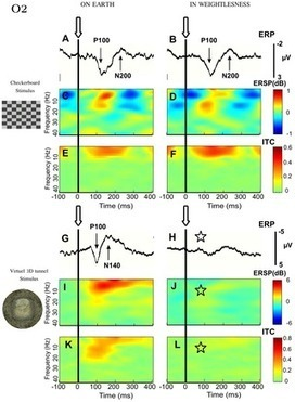 Gravity Influences Top-Down Signals in Visual Processing   Social Foraging   Scoop.it