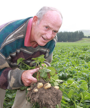 Frost and rain knock new potato supplies - The Southland Times | Ireland Travel | Scoop.it