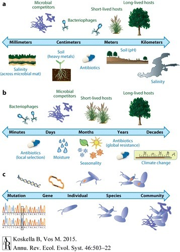 Annual Review of Ecology, Evolution, and Systematics: Adaptation in Natural Microbial Populations | Discovery of Marine Natural Products | Scoop.it