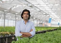 Gotham Greens to build one of the country's largest commercial, rooftop greenhouses in Jamaica, Queens | Vertical Farm - Food Factory | Scoop.it