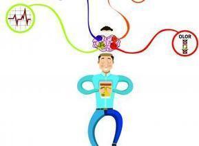 El cerebro, la voz más poderosa del consumidor - Portafolio.co   Psicología   Scoop.it