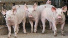 Dordogne : le chemin des carcasses d'animaux fait polémique - France 3 Aquitaine   Agriculture en Dordogne   Scoop.it
