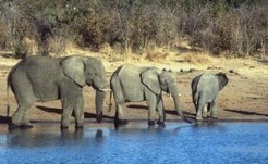 Zimbabwe: Call for Commission of Inquiry Into Hwange Poaching Disaster | Wildlife Trafficking: Who Does it? Allows it? | Scoop.it