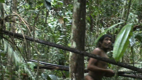 Amazonian tribe in Brazil caught on camera for first time - video | Newsroom | Scoop.it