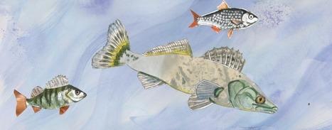 Nofima: Gathers to rescue future fish stocks   Aquaculture Directory   Aquaculture Directory   Scoop.it