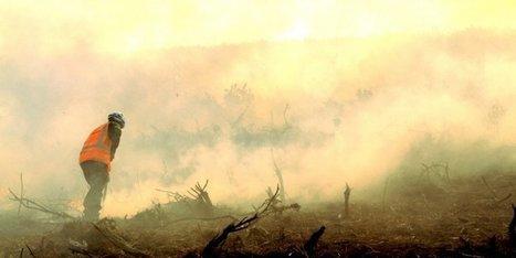 Pays basque :  les pompiers à l'assaut d'un feu de montagne à Sare | Agriculture en Pyrénées-Atlantiques | Scoop.it