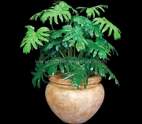 Artificial Selloum Plant - Commercial Silk Int'l | Artificial, Silk Trees Knowledge Center | Scoop.it