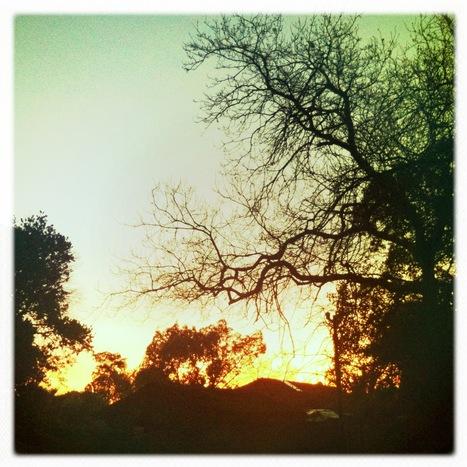 Backyard | Hipsta | Scoop.it