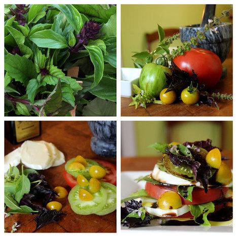 Healthy Farms: Basil Rules | Biocontrol (english) | Scoop.it