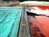 Bloody Ocean: Not Exactly The End of Days | Environmental progress | Scoop.it