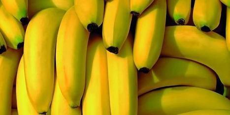 Le Plan Banane Durable a-t-il été efficace ?   HORTICULTURE BOTANIQUE   Scoop.it