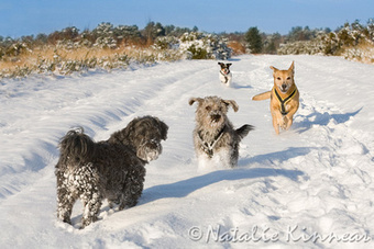 Dogs Trust 2012 Corporate Christmas Card features our Rescue Dogs | Dogs | Scoop.it